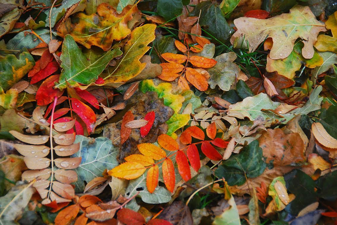 fall blog